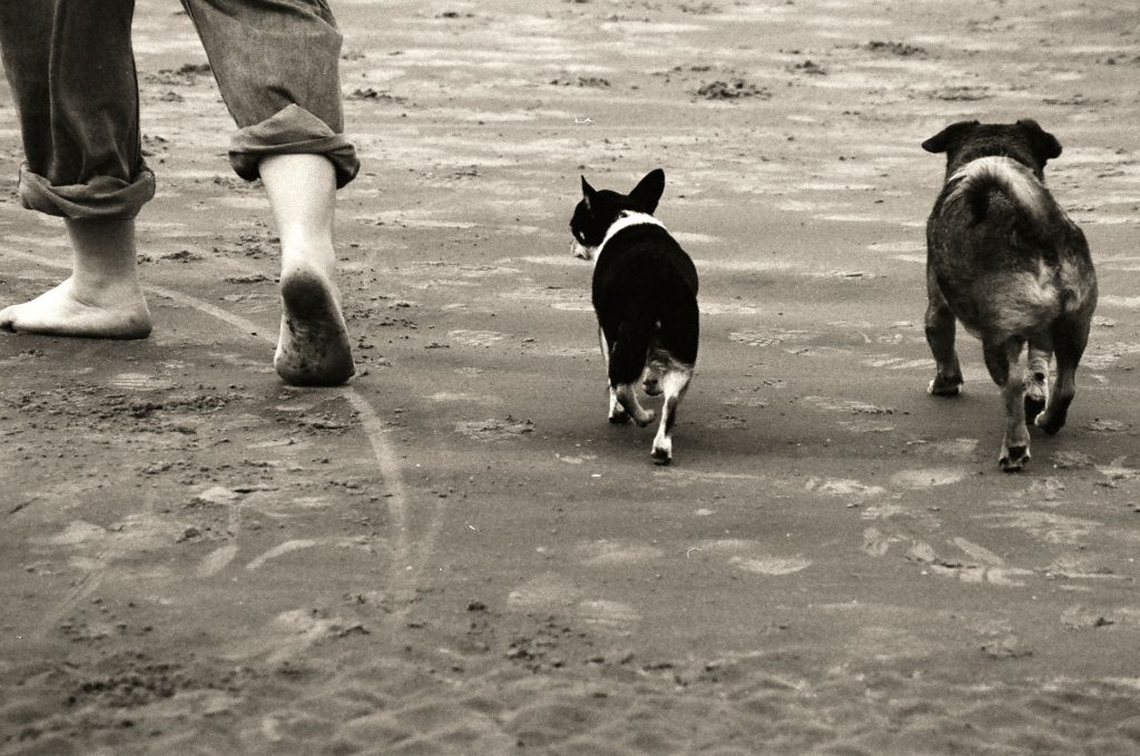 chien marche derrière