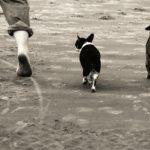 """Apprendre la commande """"derrière"""" à son chien"""