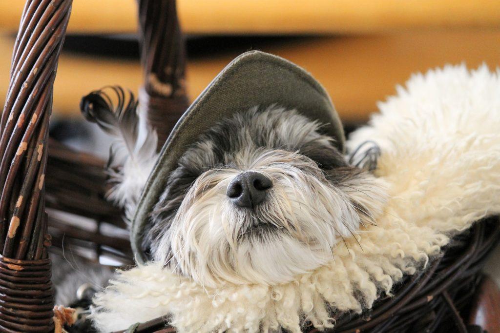 Habituer son chien à la caisse de transport