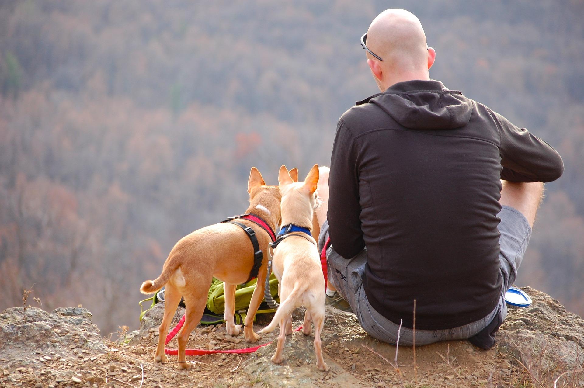 chiens randonnée et gestes d'urgence