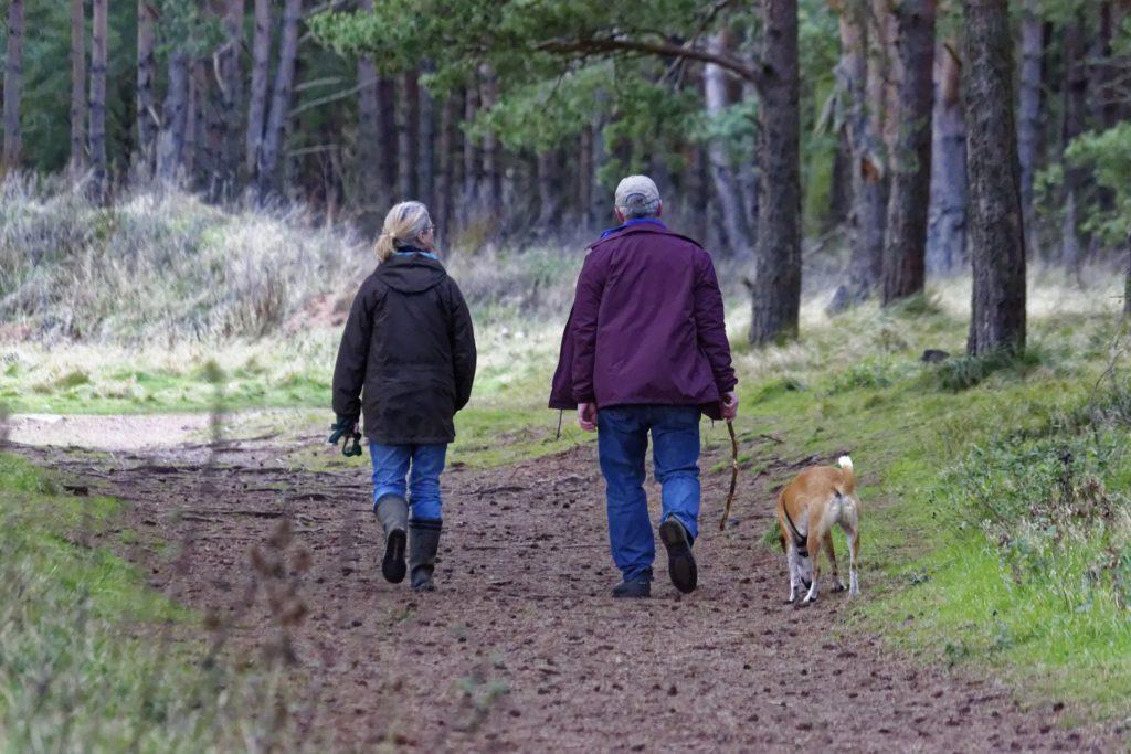 chien marche derrière randonnée