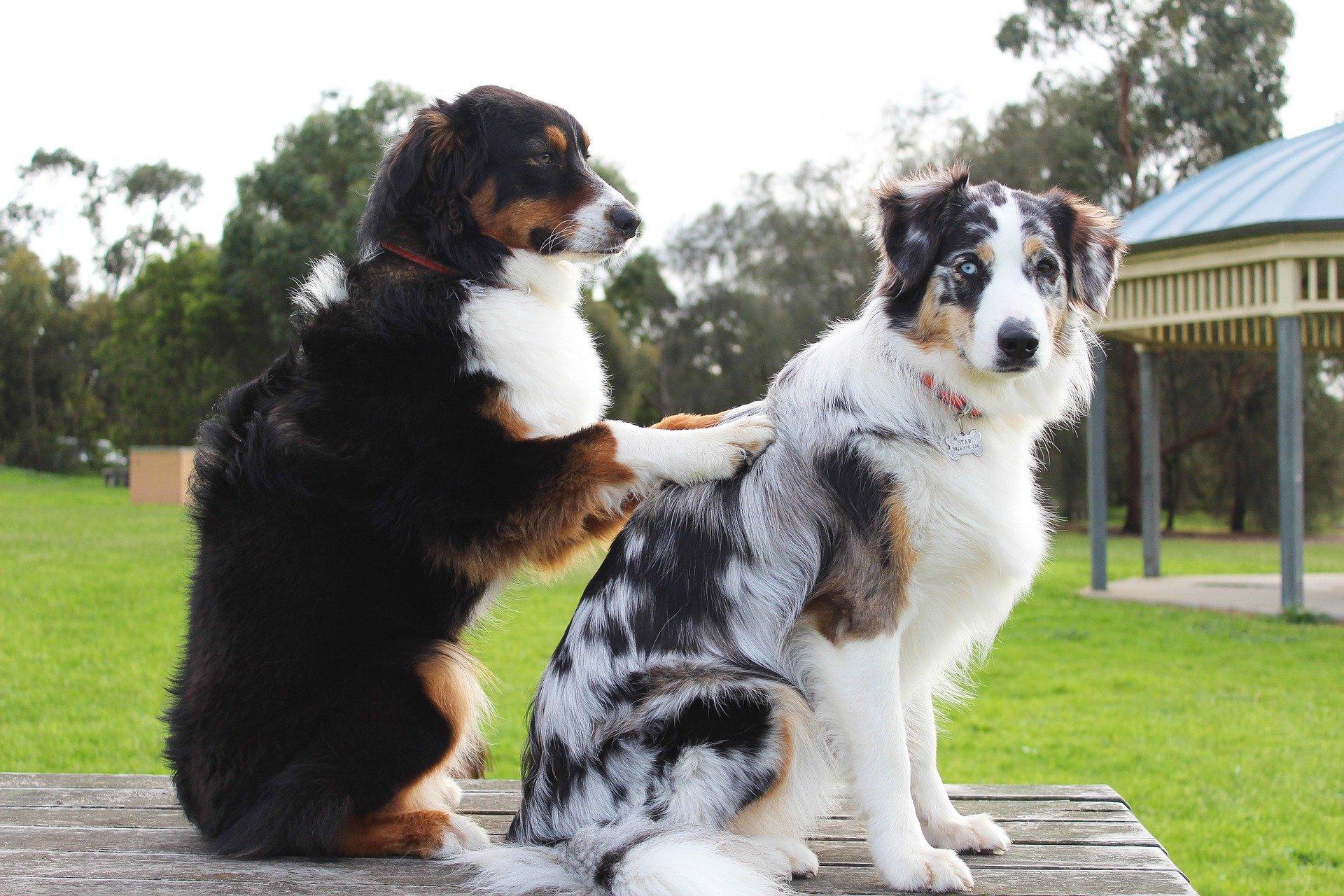 Massages pour chien âgé