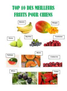 alimentation crue les fruits pour chien