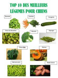 alimentation crue les légumes pour chien