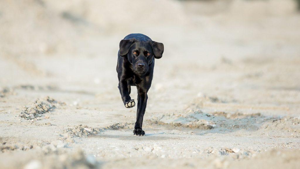 Motivation à recevoir / à éviter éducation canine