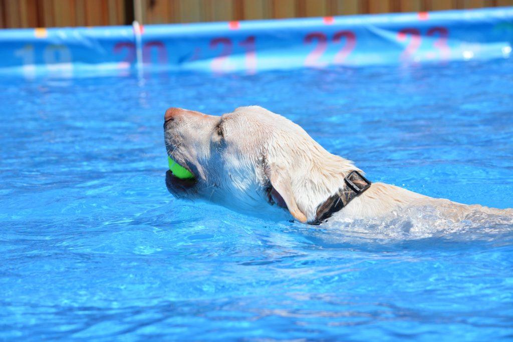 Hydrothérapie pour chien