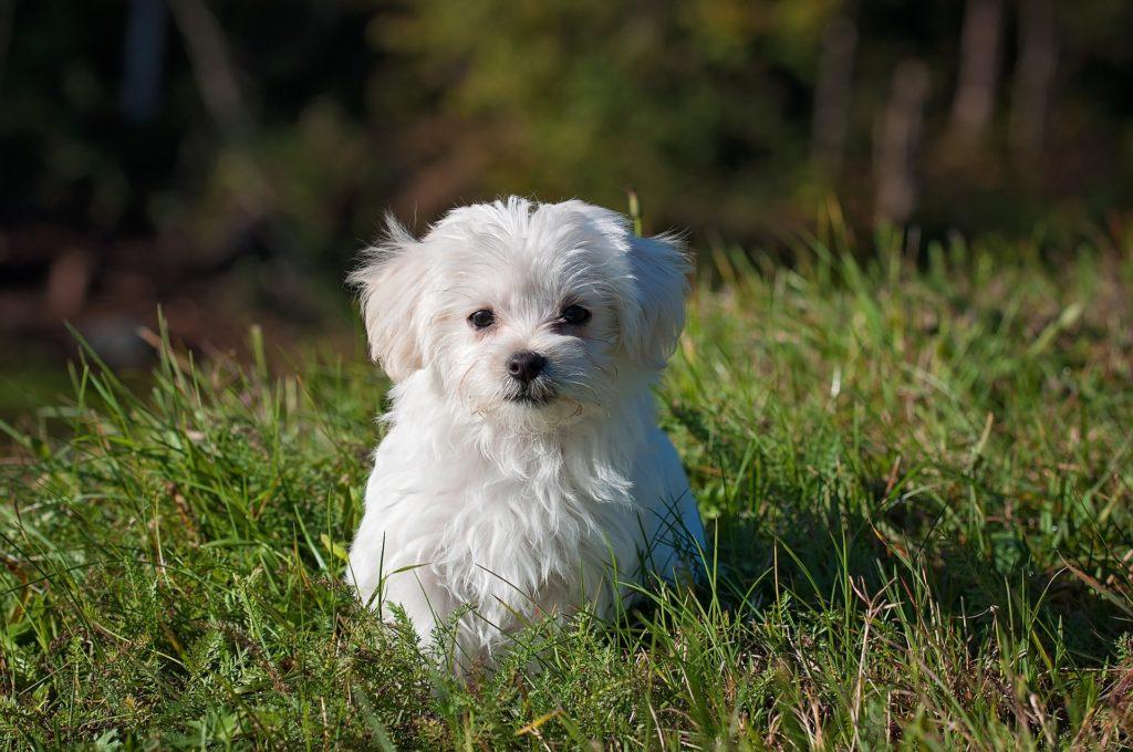 Chiot jeune chien et voyage