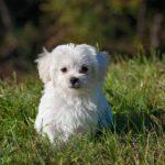 Voyager avec un jeune chien ou un chiot
