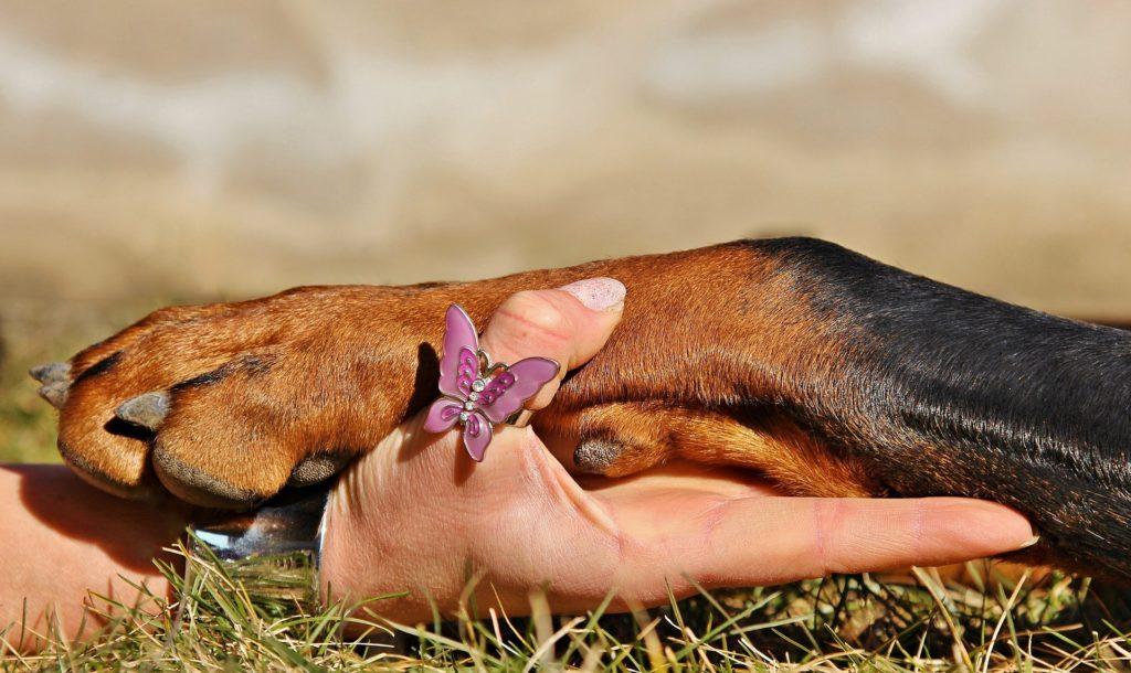 Préparer les coussinets d'un chien avant une randonnée