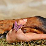 Comment protéger et soigner les coussinets d'un chien en randonnée