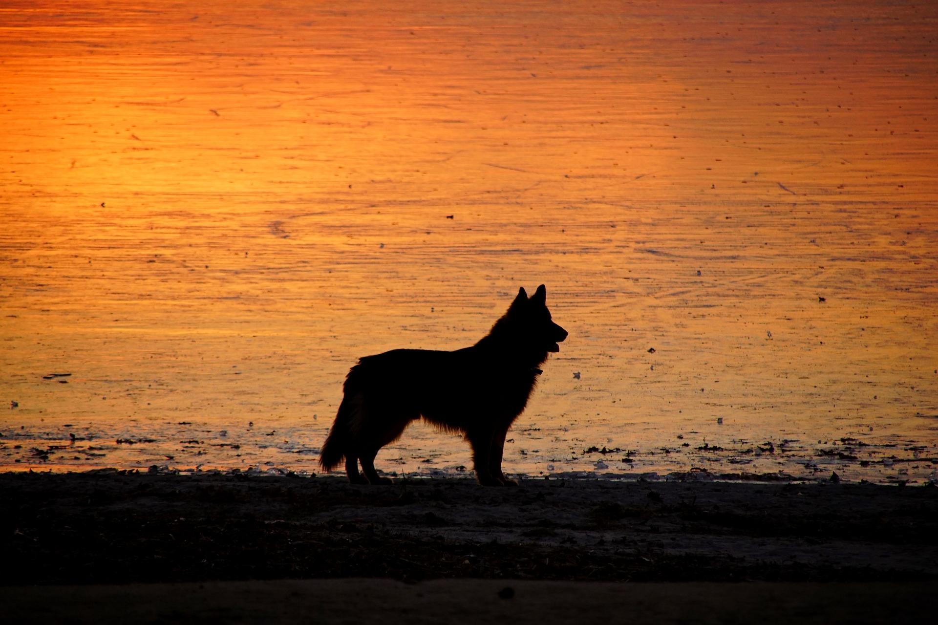 Prévention de la leishmaniose chez le chien