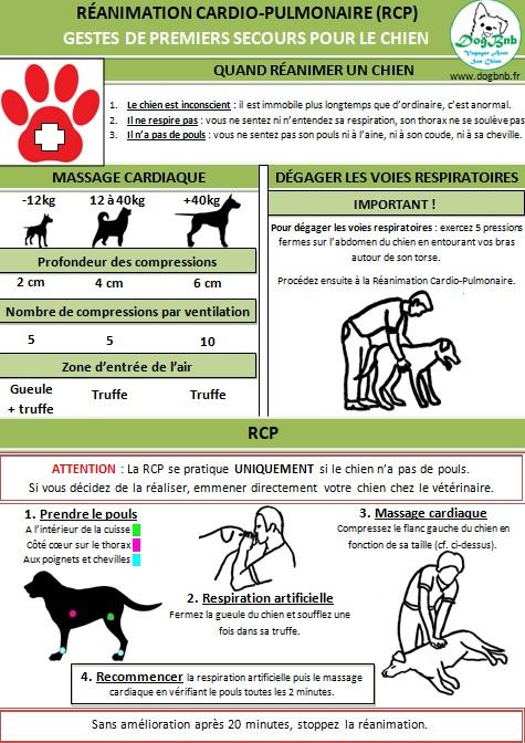 Affiche RCP chien