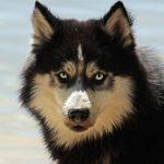 Éduquer son chien : règle des 3D et récompenses