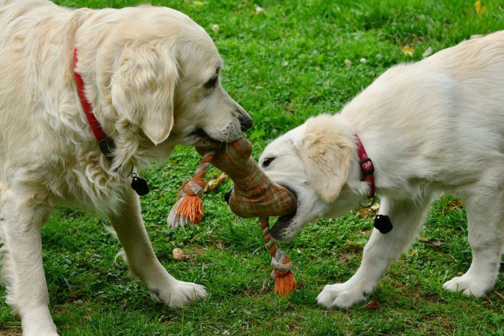 Renforcement positif pour apprendre le lâche et le laisse à un chien