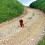 Apprendre le stop à distance à un chien