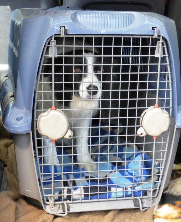 Cage pour chien de type Vari-Kennel