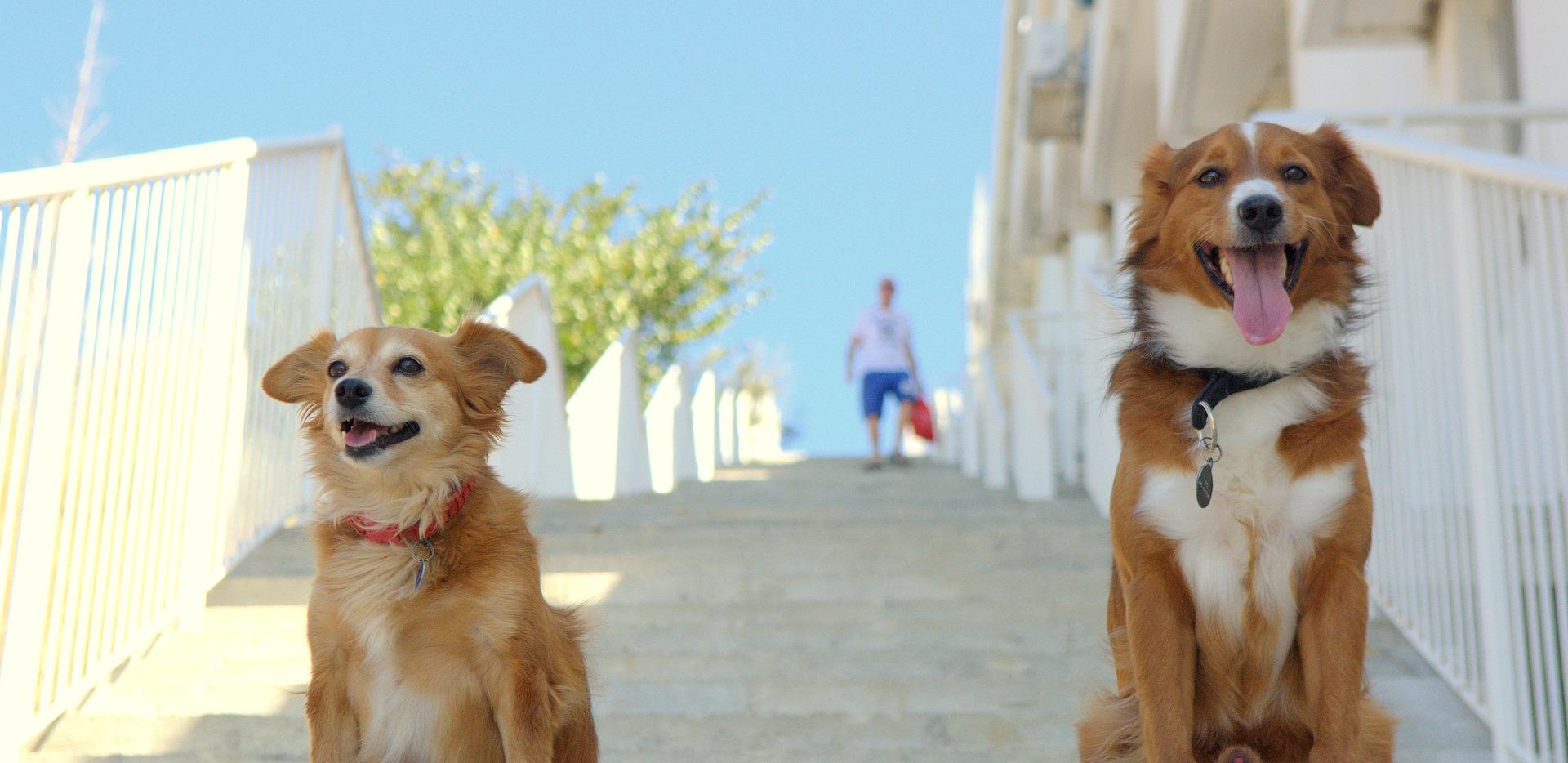chien référent et sécurité