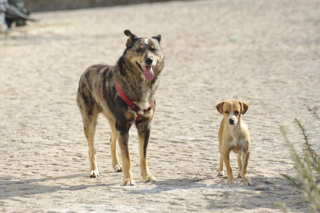 chiens antiparasitaires