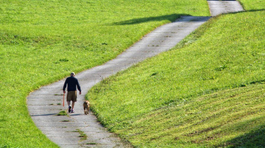direction gauche et droite chien