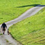 Éducation canine : apprendre la gauche et la droite à son chien