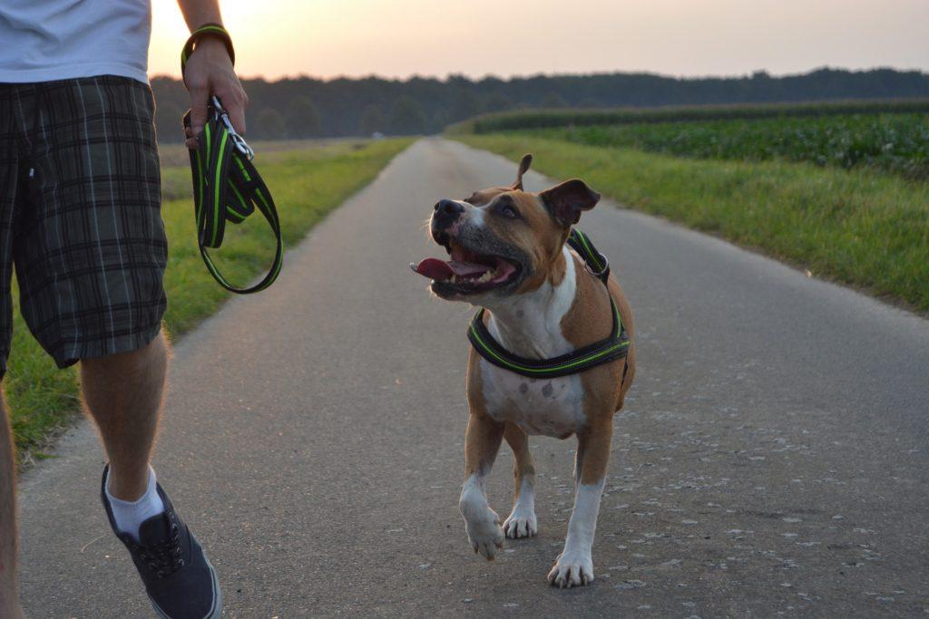 Gauche et droite : enseigner les directions à son chien