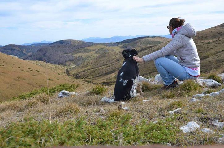 Road-trip chien et visites vétérinaires