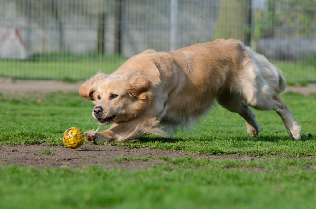 adopter chien refuge avantages