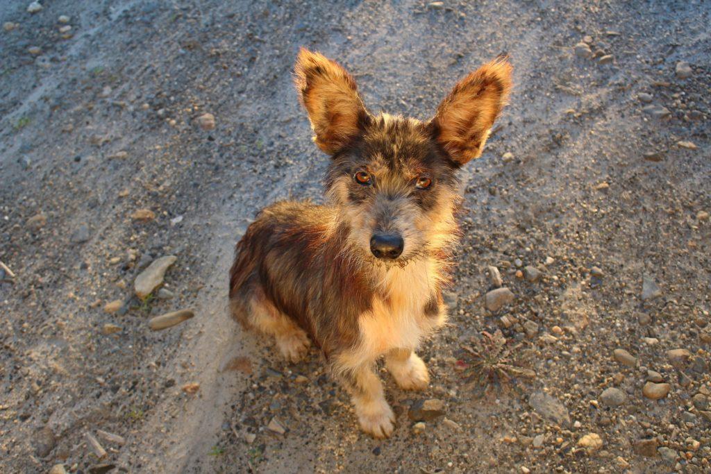 Adoption chien avantages inconvénients des particuliers
