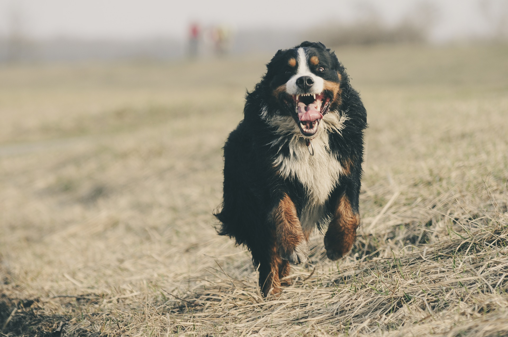 chien santé vétérinaire bilan sanguin