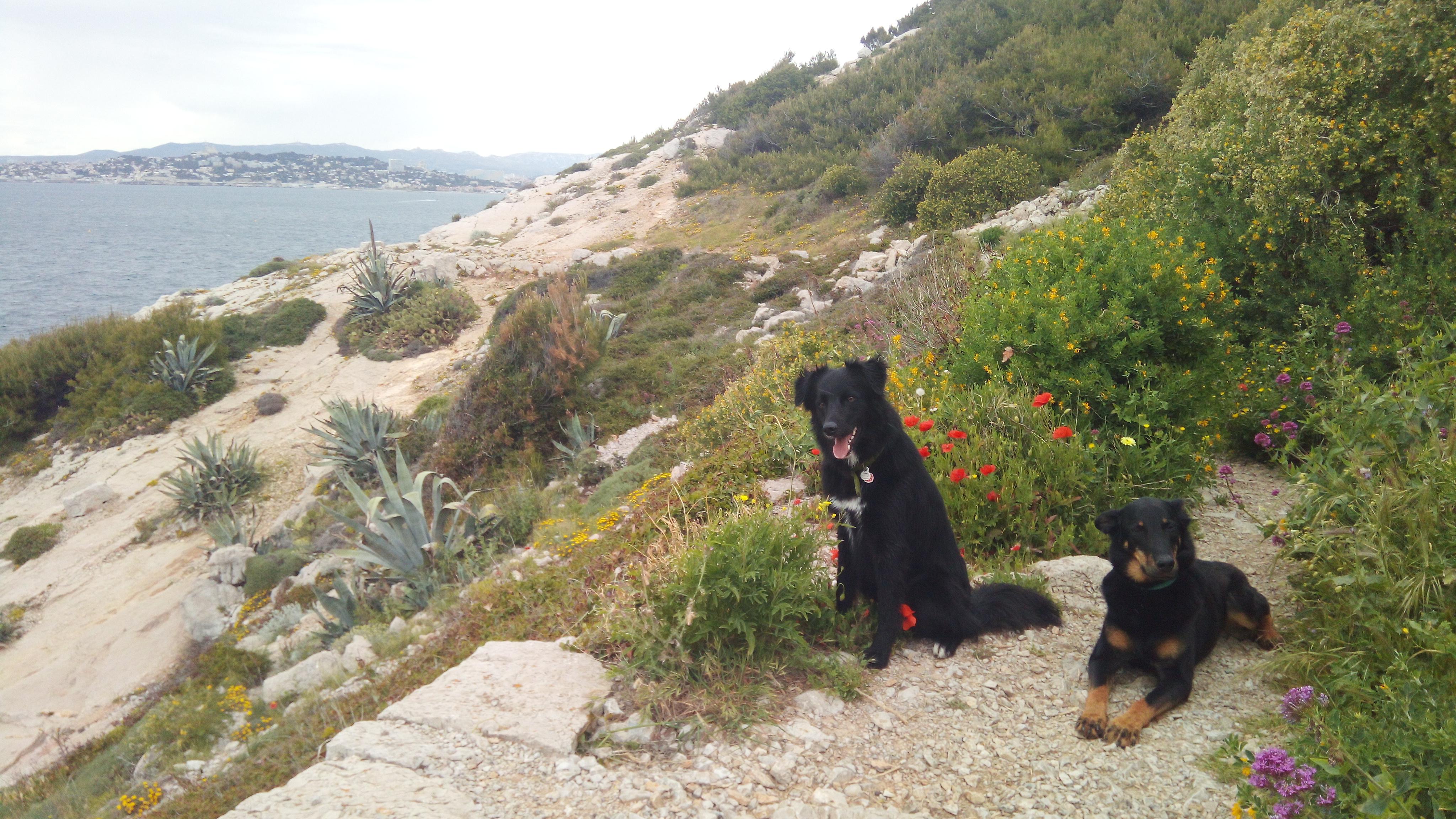 Road-trip chien : avantages et inconvénients