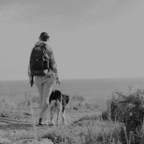 Road-trip chien et matériel