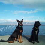 Road-trip : partir avec son chien