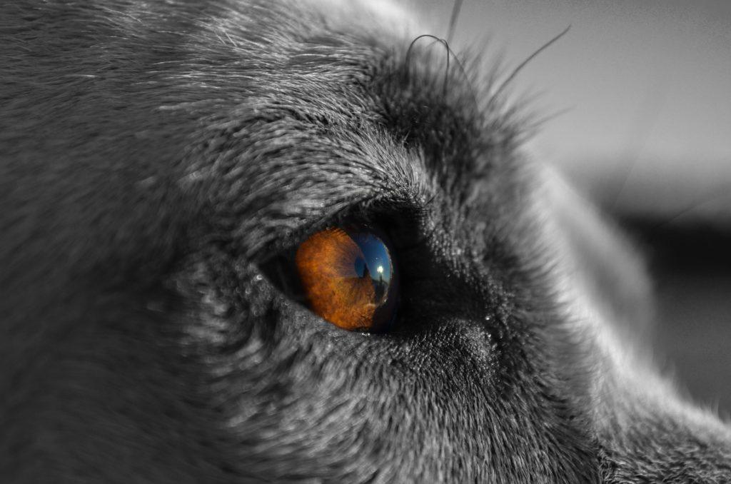 chien 5 sens