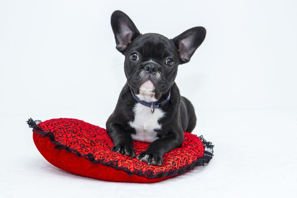 Adoption chien animalerie