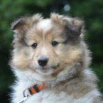 Adopter un chien : les élevages canins (4/4).
