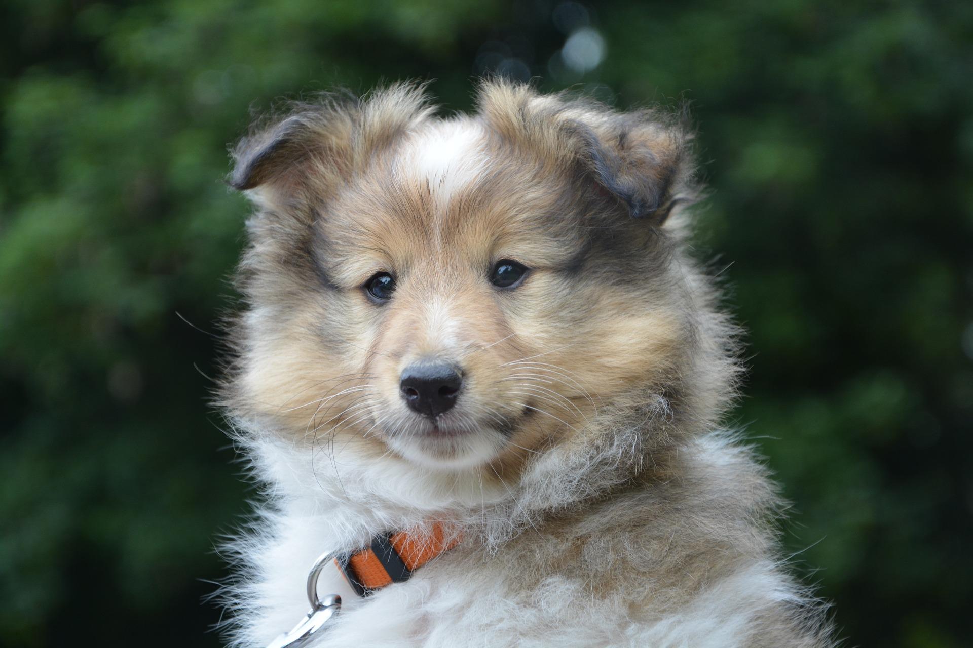 adopter chien élevage