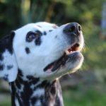 Clicker : bénéfices sur le chien et techniques d'utilisation
