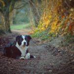 Comment devenir un référent pour son chien