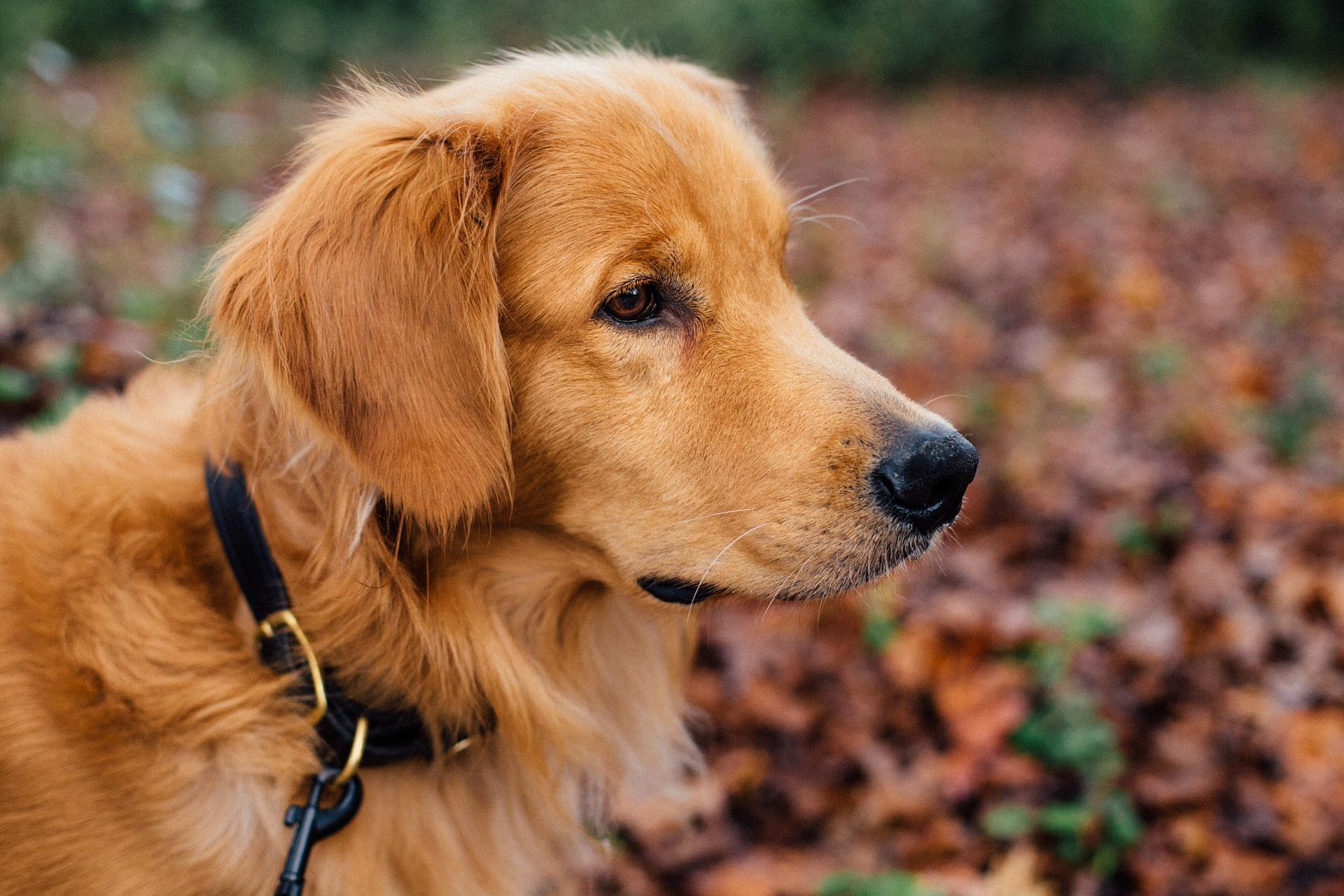 LA complicité renforcée grâce à la longe ou la laisse pour chien