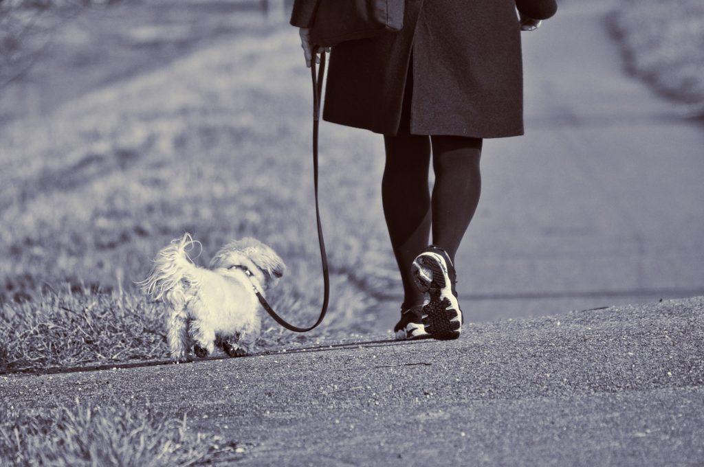 Laisse pour chien et sécurité