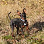Apprendre à utiliser le clicker en éducation canine en 3 étapes