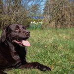 10 raisons d'éduquer son chien pour voyager