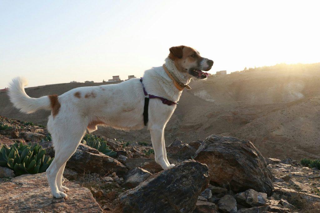 éduquer chien et l'emmener partout