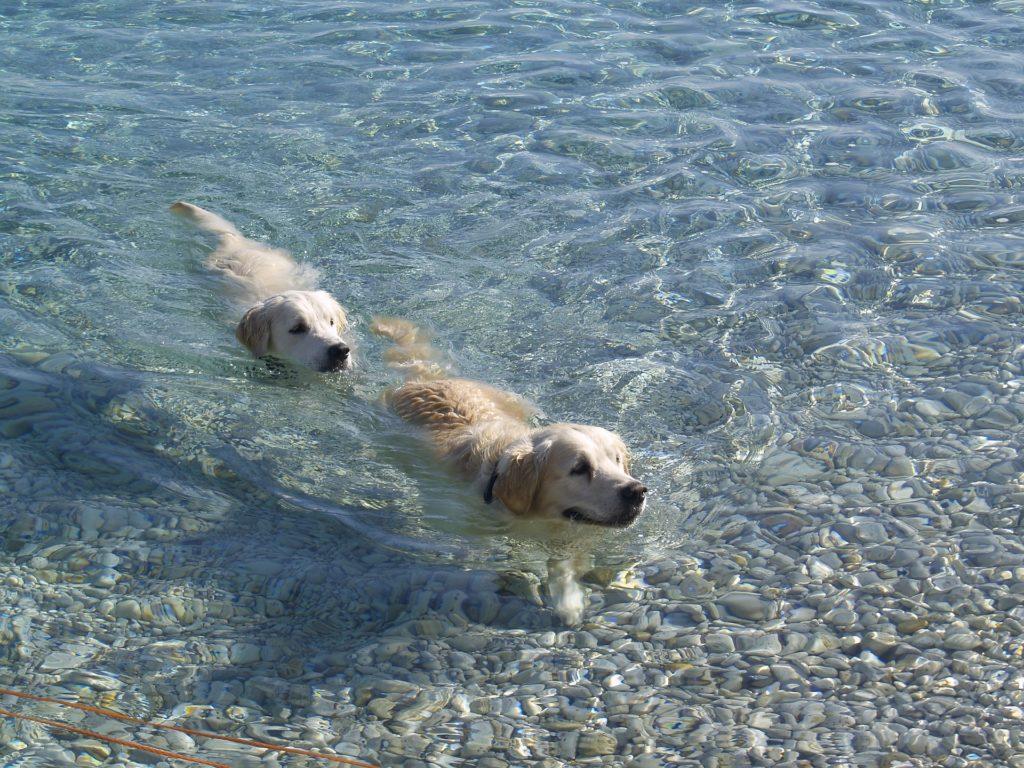 éduquer chien pour son bien-être