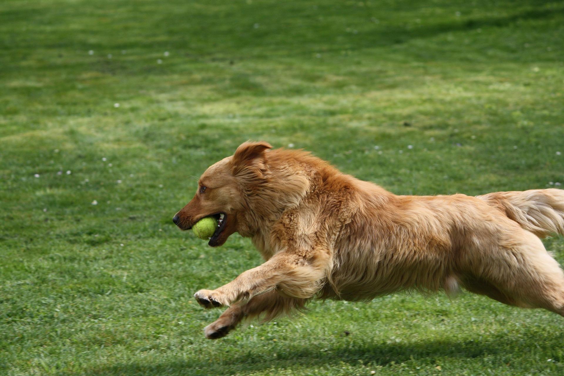 Éduquer chien par le jeu