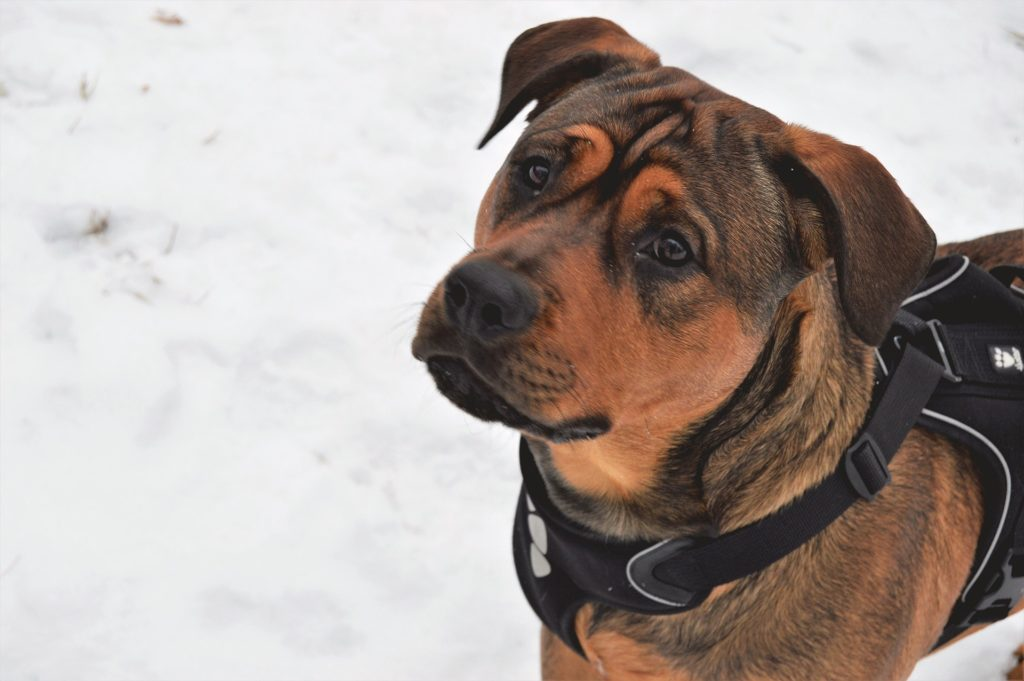 éduquer chien voyage sécurité