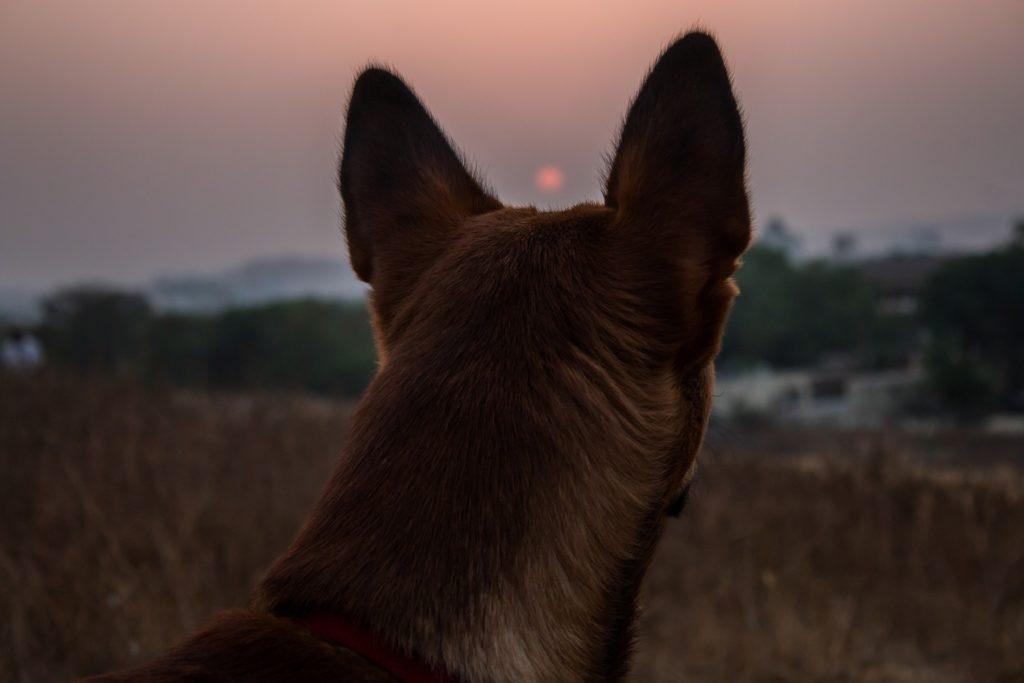 éducation du chien et complicité
