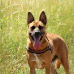 Clicker : 7 étapes pour charger un chien
