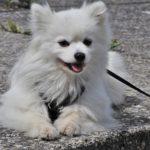 Laisse pour chien : quelle utilité en éducation canine