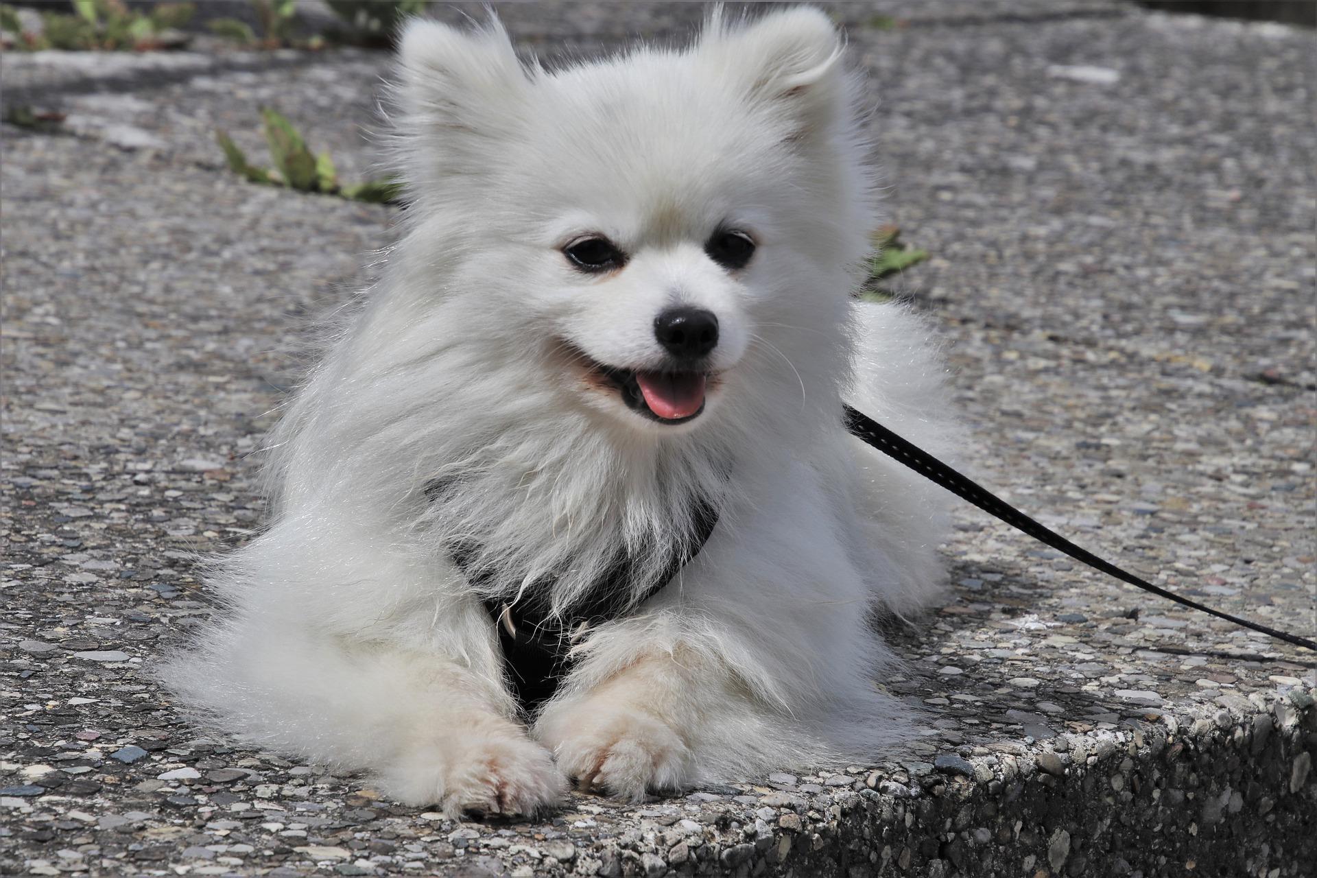 chien éducation canine et laisse